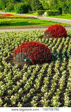 Summer street landscaping view - flowerbeds with landscaping features in form of ladybugs covered with red begonia flowers. Unusual funny landscaping in the summer park.