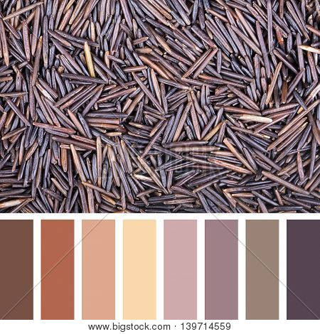 A background of wild rice In a colour palette with complimentary colour swatches.