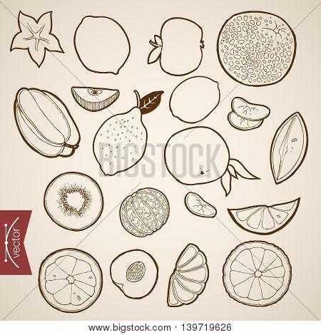 Engraving vintage hand drawn vector fruit food citrus Sketch