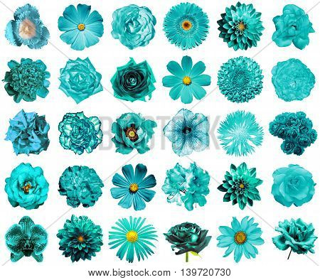 Collage Of Natural And Surreal Turquoise Flowers 30 In 1: Peony, Dahlia, Primula, Aster, Daisy, Rose