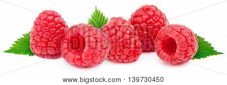 Five ripe raspberries in a line with green leves isolated on white background with clipping path