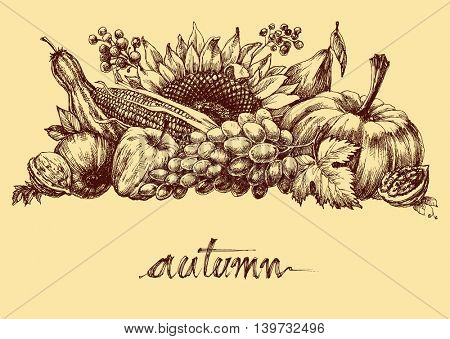 Autumn fruits and vegetables abundance. Fall background hand drawing