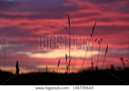 Grass straw in the sunset ans a colorful horizon