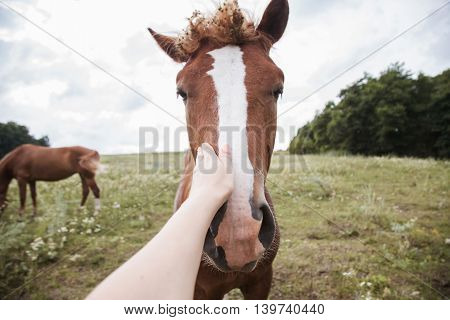 Photographer Stroking His Hand Horse