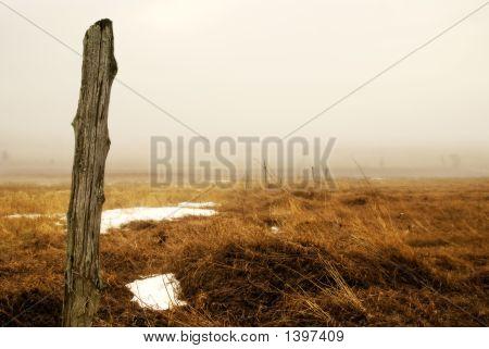 Foggy Farmland