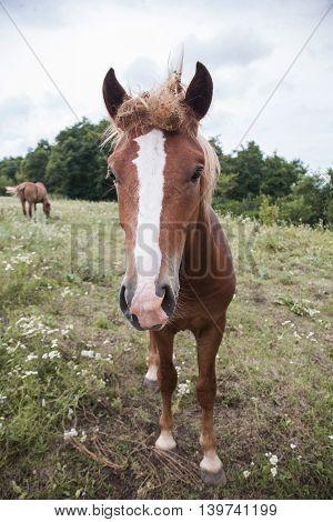 Beautiful Horse Closeup