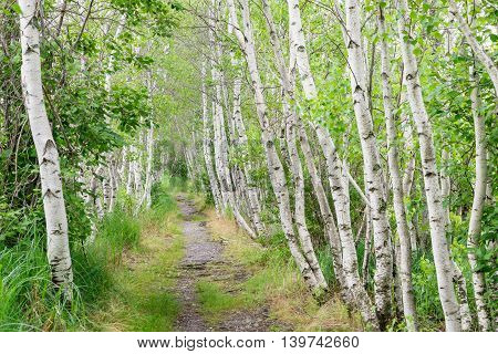 Jesup Path at Sieur de Monts Spring in Acadia National Park Mt. Desert Island Maine.