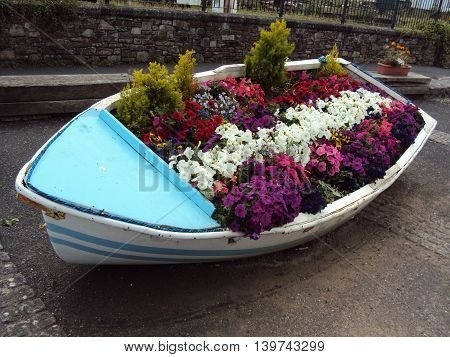 Flowerbed boat photographed at Appledore in Devon