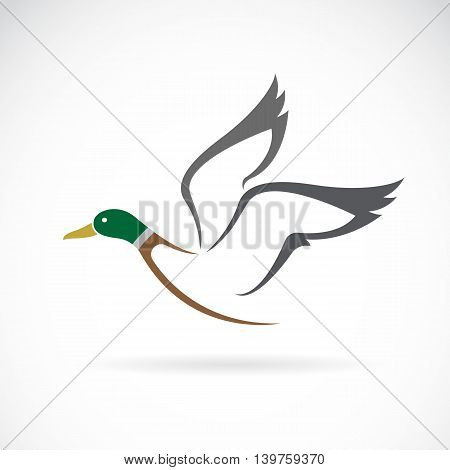 Vector image of an flying wild duck design on white background.