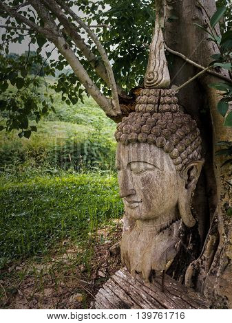 Ancient wooden Buddha statue head cracked and burned on bodhi tree background in hermitage at northern of thailand