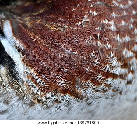 The Magnificent Of Mandarin Duck's Chest Feathers With Sharp Details, Exotic Background