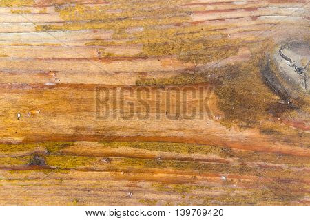 The old boards covered with a yellow varnish. The varnish was partially erased boards in places have darkened from dampness