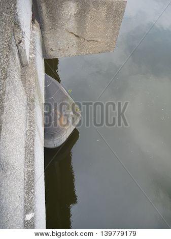 Detail Of A Pilar Of A Bridge