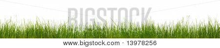 Extra large horizontal strip of grass, dirt, and roots isolated on white background.