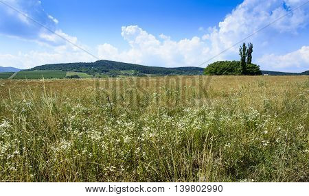 Beauty Summer Landscape With Blue Sky And Trees