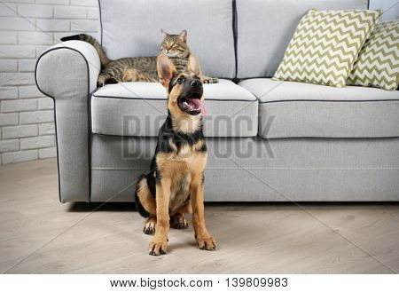 Cute cat and funny dog in living room