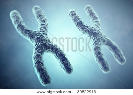 XX Chromosome concept. Female Heterogametic Sex. 3d illustration