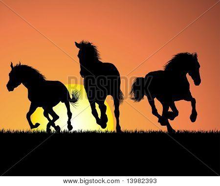 Horse silhouette on sunset background. Vector illustration.