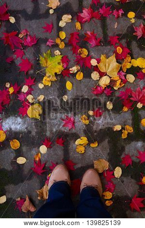 Someones legs on fall road with fallen colorful leaves, top view