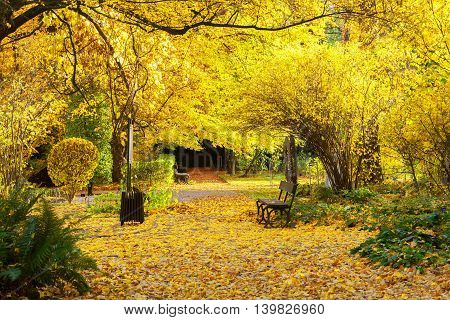 Fall park path with vibrant yelow fallen leaves and tree