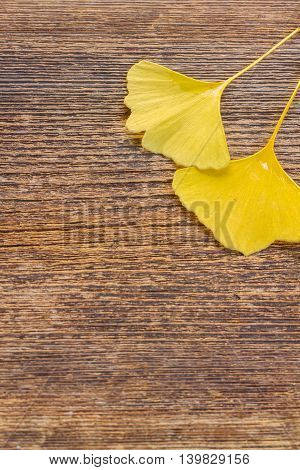 Fall yellow leaves of ginkgo biloba on wooden background