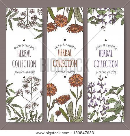 Set of three color vector herbal tea labels with valerian, calendula and sage on hand drawn sketch. Placed on white background.