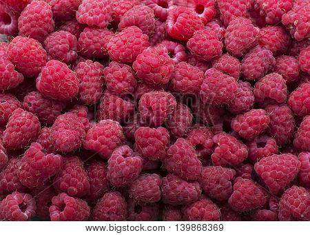 Ripe juicy garden fragrant raspberry background horizontal design.