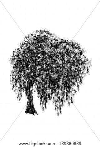 Willow. Drawing tree on white bacground. Black silhouette wood.