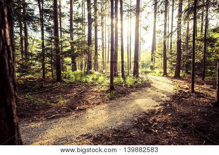 Hiking path and sunset in beadutiful woods inspirational summer landscape in forest. Walking or biking path dirt road.