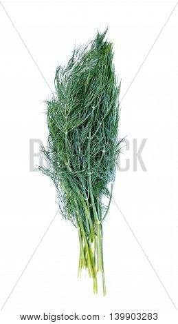 Green leaves of fennel plants isolated on white background