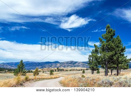 Yellowstone Landscape And Dirt Road