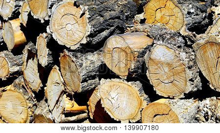 Firewood cut and stacked for the winter season.