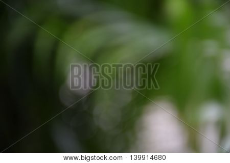 green blur abstract background from nature. leaf and tree Bokeh.