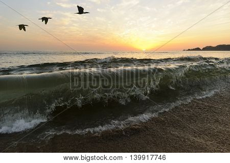 Birds silhouettes is a large ocean wave captured in mid break as it is ready to crash on shore while a small flock of birds fly overhead..