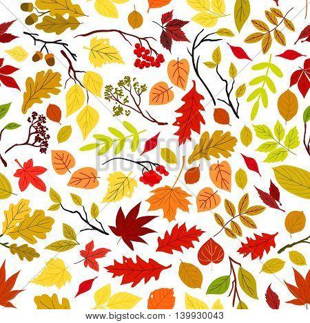 Autumn leaves seamless pattern background. Vector leaf and stem elements. Tree seeds and fruits. Foliage of oak, maple, birch, aspen, chestnut, elm, poplar, rowanberry acorn