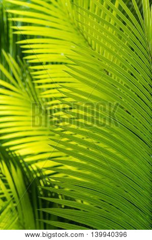 close up of backlit palm tree fronds