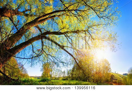 Rural landscape with the morning sun shining through a beautiful old willow tree blue sky in the background