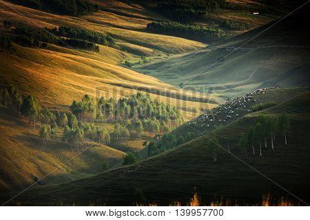 beautiful mountain landscape in autumn morning