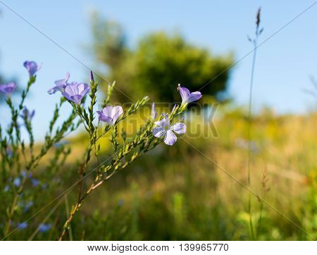 meadow spring flowers blooming in the meadow