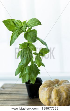 A basil and pumpkin