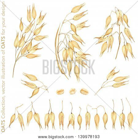 Vector illustration Oats collection for your design.