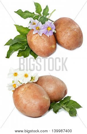 potatoes with leaves and flowers on a white background isolated