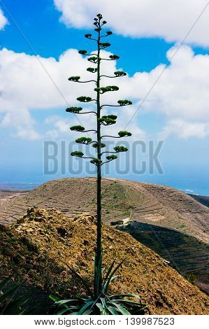 Landscape of the volcanic island Lanzarote Spain