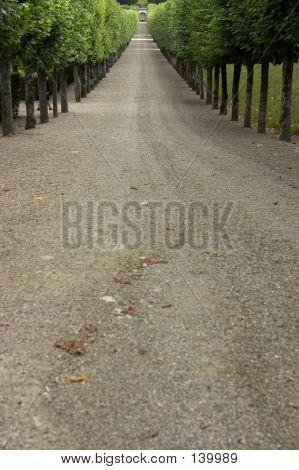 Tree Lined Gravel Track Leading To Garden, Chateau De Villandry, France