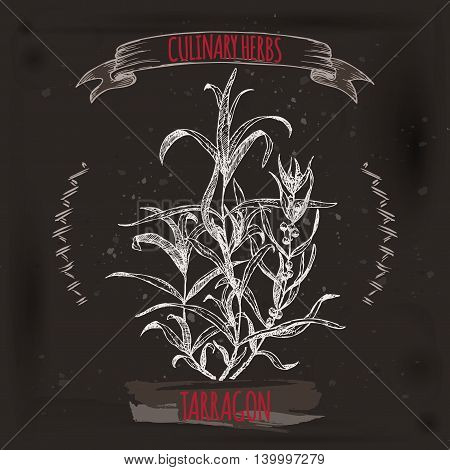 Artemisia dracunculus sativa aka French tarragon vector hand drawn sketch on grunge black background. Culinary herbs collection. Great for cooking, medical, gardening design.