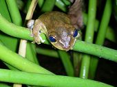 Cool frog balancing himself on a pond reed **Note slight graininess, best at small sizes. poster