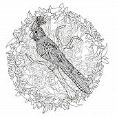 High detail patterned illustration in zen tangle style. Adult coloring page for antistress art therapy. Parrot corella on the branch. Template for t-shirt, tattoo, poster or logo. Vector illustration. poster