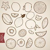 Engraving vintage hand drawn vector Fruit collection. Pencil Sketch lemon, orange, papaya, lobule citrus illustration. poster
