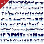 Set of  different animals, birds, insects and fishes  silhouettes poster