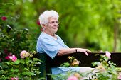 Happy senior lady sitting on wooden bench blooming rose garden. Grandmother picking fresh flowers. Retired elderly woman gardening on sunny summer day. Active retirement and health care concept. poster